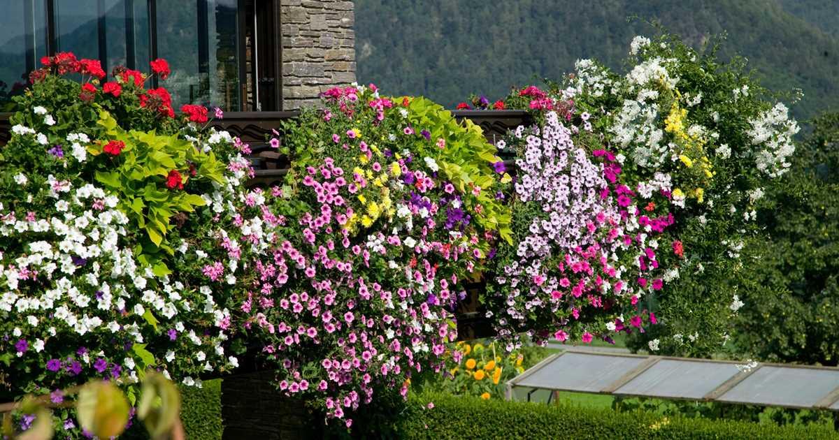 Der Winter wird grün: Winterharte Pflanzen für den Balkon